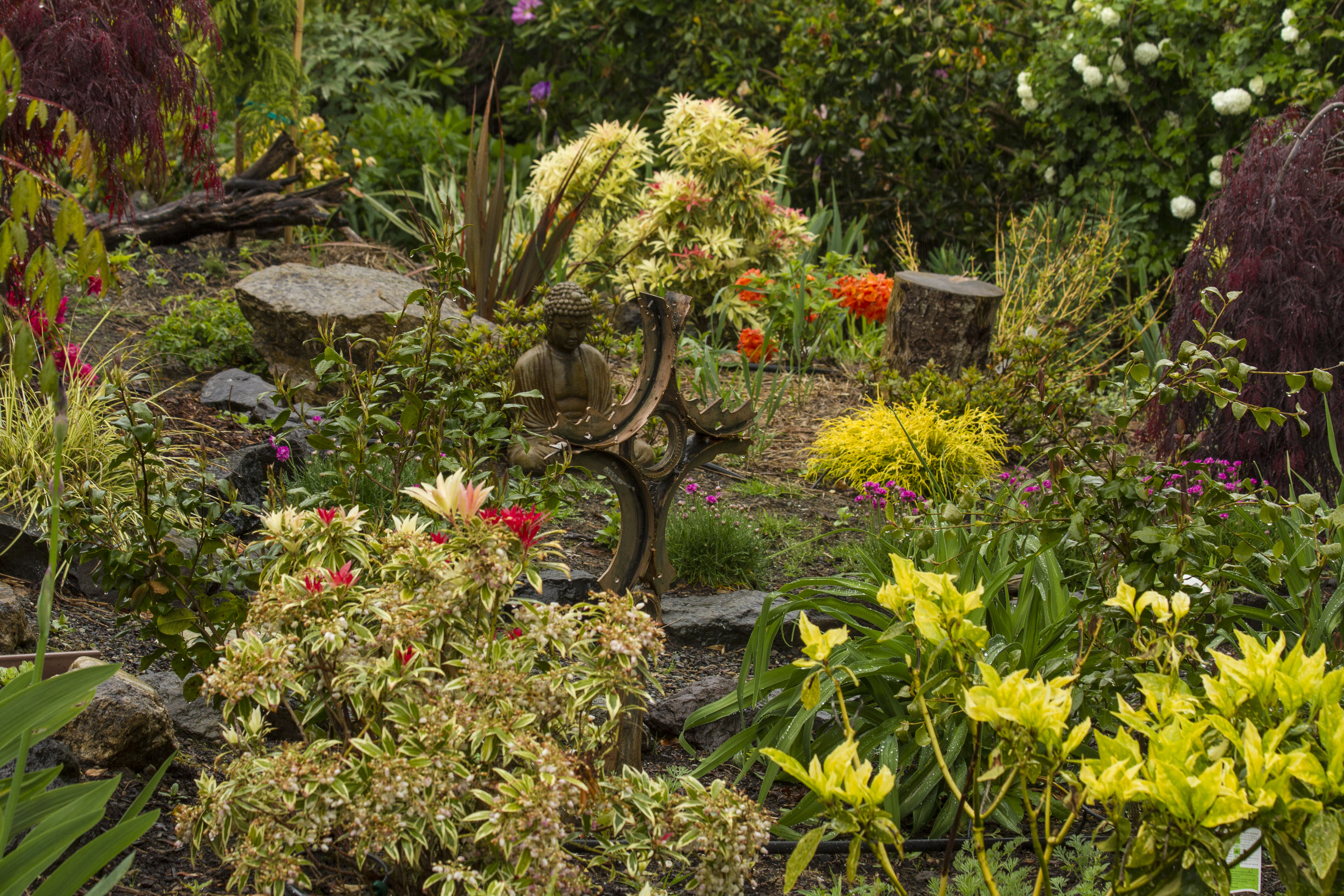 Rain Garden for a Rainy Day – The New 3 Rs: Retire, Recharge, Reconnect