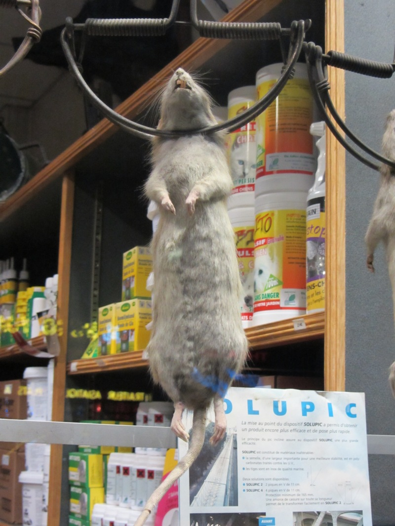 Parisian Pest Control Shop Window Display