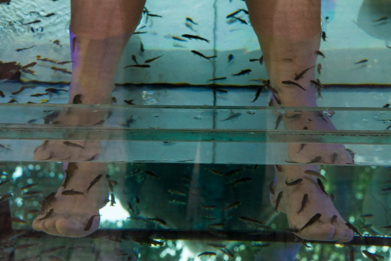 The latest in pedicure treatments. Looks a bit fishy to me.