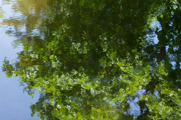 Reflections on a pond at Val-Kill, Eleanor Roosevelt's home.