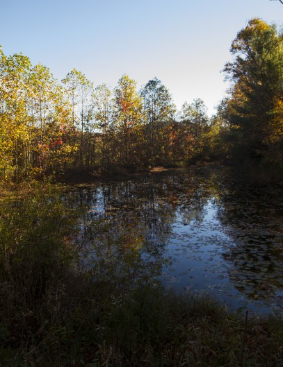 Pond near Gerton, NC. Dry Ridge Road.
