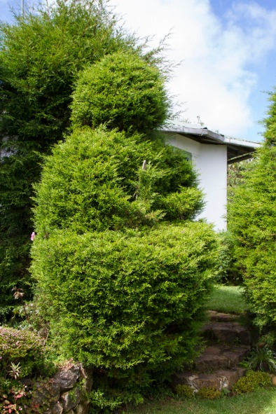 From Bush to Buddha. Topiary at the Heritance Tea Factory hotel near Nuwara Eliya, in the Sri Lankan highlands.