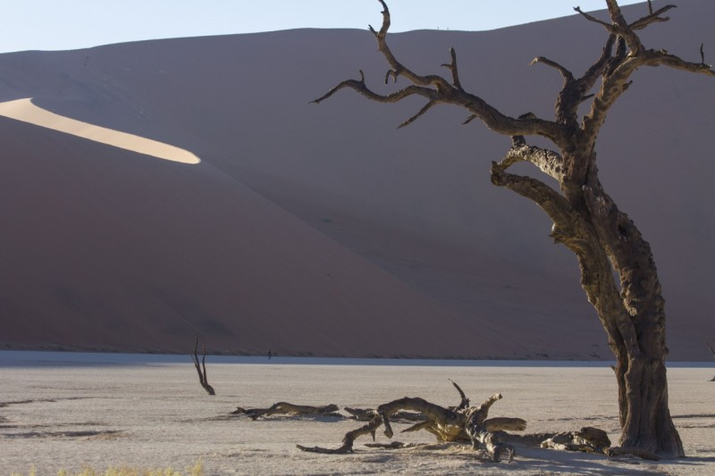 Ancient acacia tree, Deadvlei, Sossusvlei, Namibia