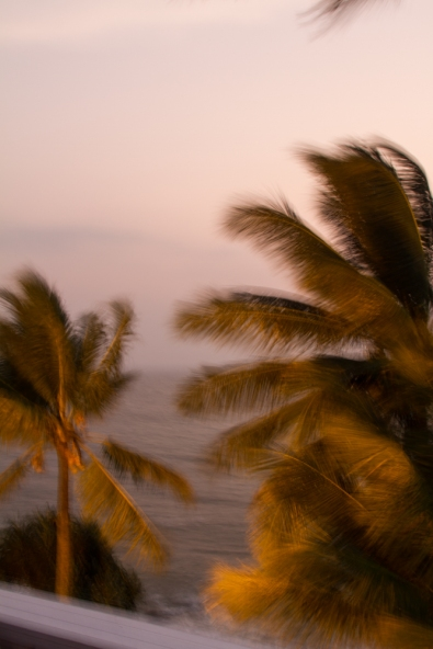 Palm trees blown by winds off the Indian Ocean, near Mount Lavinia, Sri Lanka