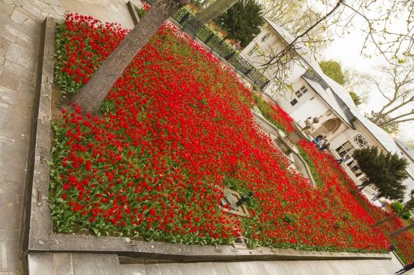 Tulip garden in the harem at Tokapi Palace, Istanbul, Turkey
