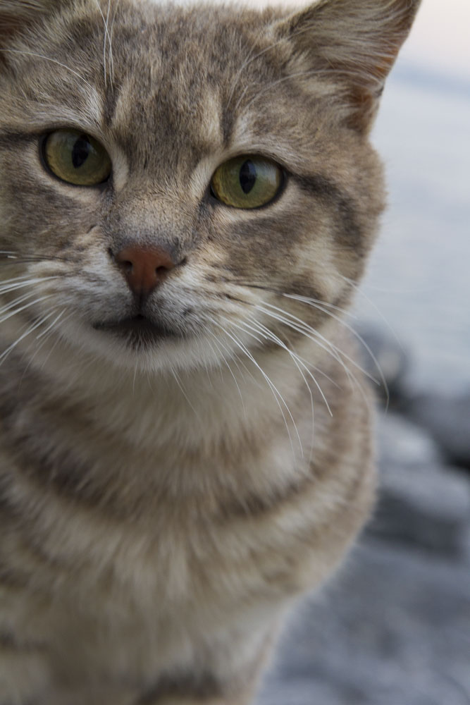 In Istanbul, street cats are plentiful and well-fed.