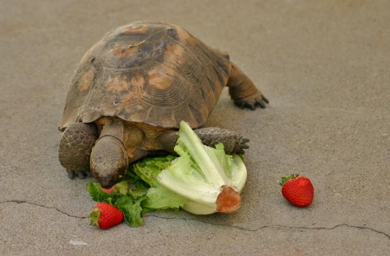 A Tortoise Comes To Tea