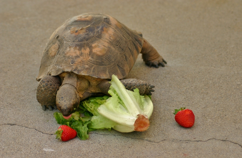 A Tortoise Comes To Tea