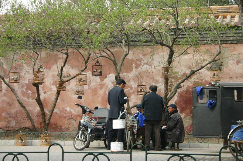 The Bird Men Of Beijing