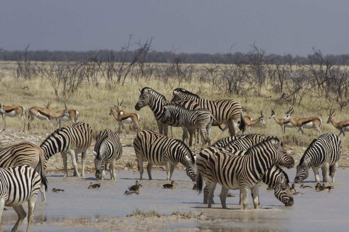 At the Watering Hole