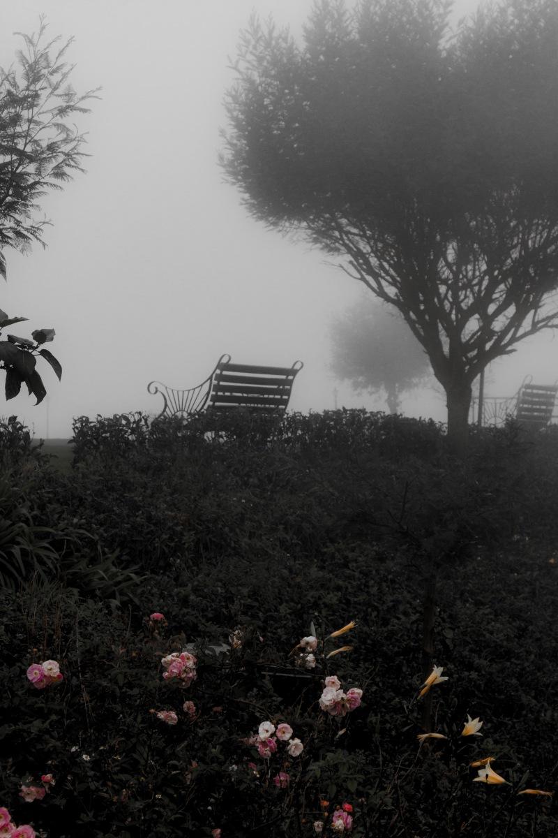 Fog in the Sri Lankan Highlands, near Nuwara Eliya