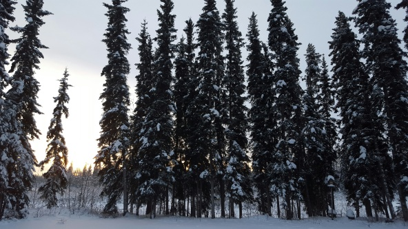 North Pole Alaska Winter Afternoon