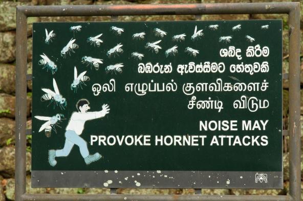 Beware of Hornets