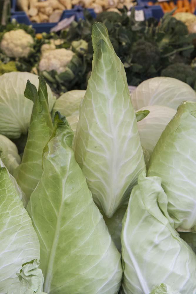 Filder-Spitzkraut or Arrowhead Cabbage, Farmers Market, Salzberg, Austria