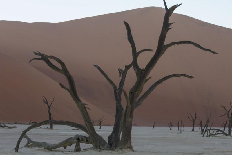 Dead camel thorn trees in the salt pan at Deadvlei, Sossusvlei, Namibia.