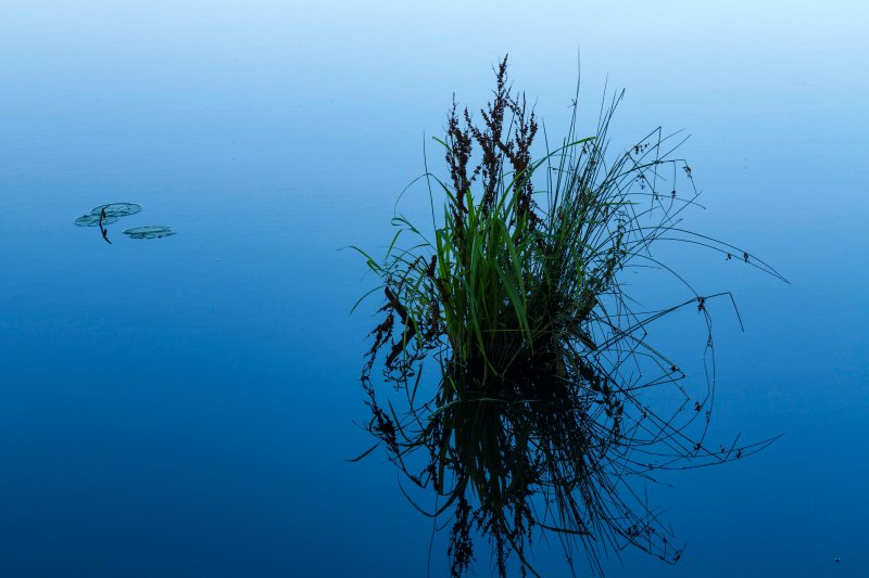 Blue Morning, Oooms Pond, Columbia County, New York