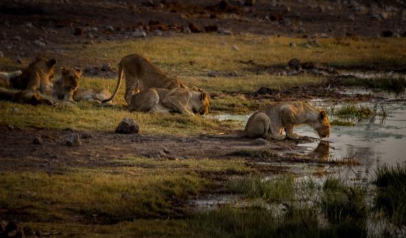 Watering Hole, Etosha National Park, Namibia