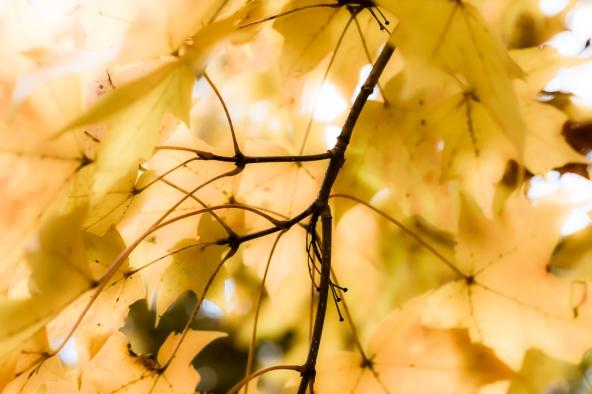 Fall Pastel
