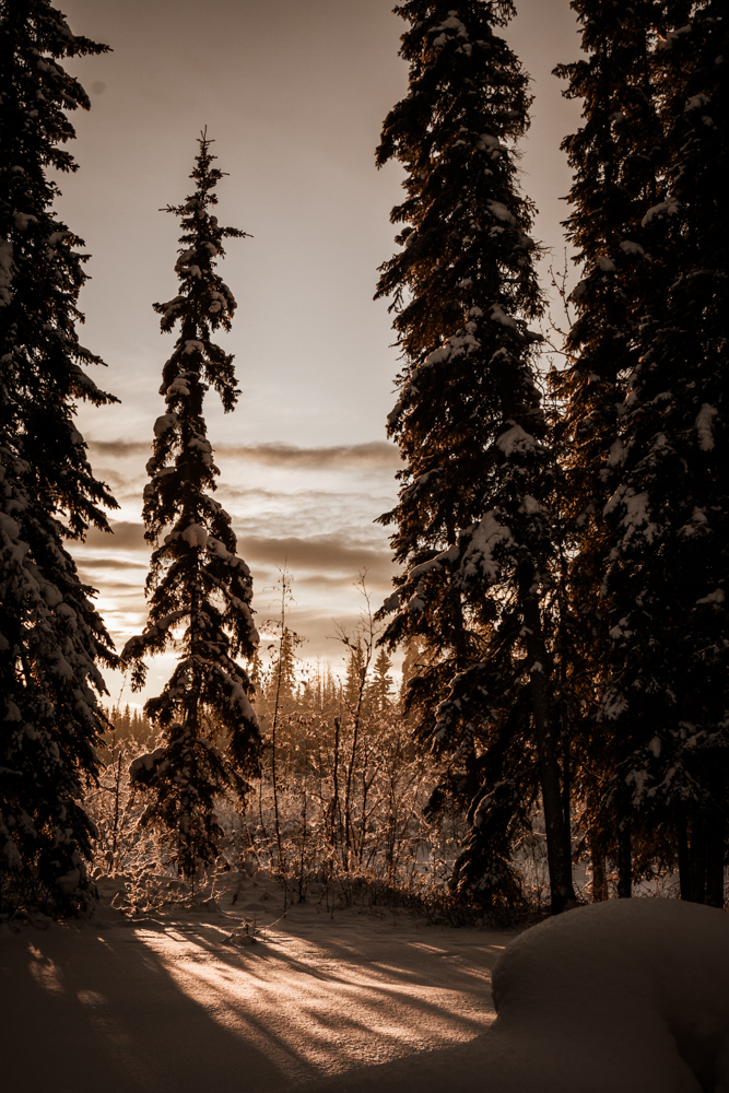 Sepia Sunrise, Northpole, Alaska
